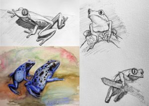 Animal Anatomy and Quick Sketch Sundays @ Zoom Videoconferencing